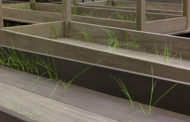 Doris Salcedo Plegaria Muda, 2008–10 Wood, concrete, earth, and grass One hundred and sixty-six parts, each: 64-5/8 x 84-1/2 x 24 in. (164 x 214 x 61 cm) Overall dimensions variable Installation view, MUAC, Mexico City, 2011 Inhotim Collection, Brazil Photo: Jason Mandella Reproduced courtesy of White Cube